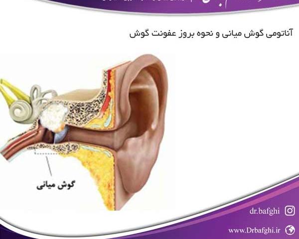 آناتومی گوش میانی و نحوه بروز عفونت گوش دکتر احمد ناظم بافقی